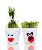 Una olla de hierba aislado en blanco — Foto de Stock