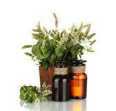Olio essenziale e menta isolato su bianco — Foto Stock
