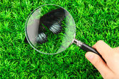 Butterfly and magnifying glass in hand on green grass — Stock Photo