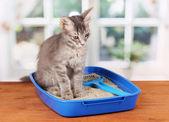 Gatito gris en gato azul basura plástica en mesa de madera en la ventana nuevo — Foto de Stock