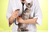 緑色の背景で子猫を調べる獣医 — ストック写真