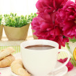 Cup hot chocolate, cookies and flower on table in cafe — Stock Photo #13351276