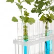 Test-tubes with a blue solution and the plant isolated on white background - Stock Photo