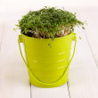 Stock Photo: Fresh garden cress on pail on wooden table