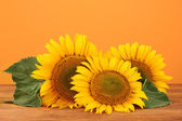 Sunflowers on yellow background — Стоковое фото