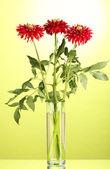 Mooie rode dahlia's in vaas op groene achtergrond — Stockfoto