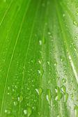 Su close-up ile güzel yeşil yaprak düşer — Stok fotoğraf