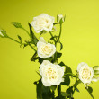 Beautiful white roses on green background close-up - Stock Photo