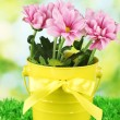 Beautiful bouquet of chrysanthemums in a bright colorful bucket on green  b - Stock Photo