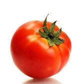 白で隔離されるトマト — ストック写真