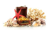 Fish oil in the chest with shells and coral isolated on white — Stock Photo