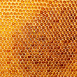 Yellow beautiful honeycomb with honey, background — Stock Photo #13395176