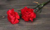 Two carnation on wooden grey background — Stock Photo