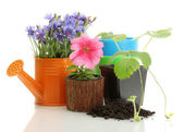 Watering can and plants in flowerpot isolated on white — Stock Photo