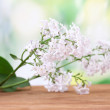 Branch of pink lilac on green background close-up — Stock Photo #13483621