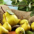 Stock Photo: Juicy flavorful pears of nature background