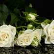 Beautiful white roses on black background close-up — Stock Photo