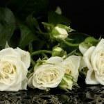 Красивые белые розы на черном фоне крупным планом — Стоковое фото