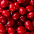 Fresh cornel berries close-up - Stock Photo