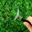 Ladybirds and magnifying glass in hand on green grass — Stock Photo #13486213