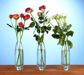 Beautiful roses in glass vases on blue background close-up — Stock Photo
