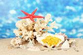 Rybí olej v shellu na modrém pozadí. myšlenka dary moře — Stock fotografie