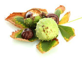 Chestnuts with autumn dried leaves, isolated on white — Stock Photo