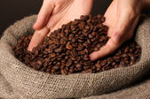 Coffee beans in hands on dark background — Stock Photo