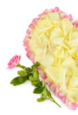 Fragment of heart of white rose petals surrounded by pink petals isolated on white — Stock Photo