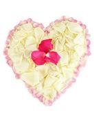 Hermoso corazón de pétalos de rosa blancas rodeada de pétalos de rosa aislados en blanco — Foto de Stock