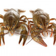 Stock Photo: Alive crayfishes isolated on white close-up
