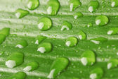 Beautiful green leaf with drops of water close-up — Stock Photo