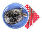 Tartaruga orecchie rosse su piastra isolato su bianco — Foto Stock