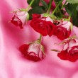 Постер, плакат: Beautiful vinous roses on pink satin close up