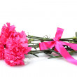 Beautiful pink carnations isolated on white — Stock Photo #13541668
