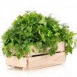 Wooden box with parsley and dill isolated on white — Stock Photo #13542269
