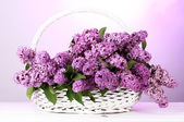 Beautiful lilac flowers in basket on purple background — Stock Photo