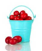 Fresh cornel berries in bucket isolated on white — Stock Photo