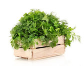 Wooden box with parsley and dill isolated on white — Zdjęcie stockowe