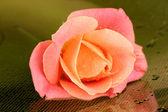 Rose med droppar på grön bakgrund — Stockfoto