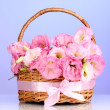 Bouquet of eustoma flowers in basket, on blue background — Stock Photo #13649172