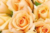 Beautiful bouquet of roses close up — Stock fotografie