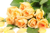 Beautiful bouquet of roses and petals isolated on white — Stock Photo