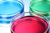 Color liquid in petri dishes on blue background — Stock Photo