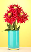 Beautiful red dahlias in vase on yellow background close-up — Stock Photo