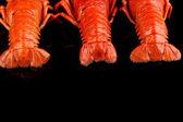 Crayfish tailes isolated on black — Stock Photo