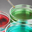 Color liquid in petri dishes on grey background - Stok fotoğraf