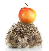 Hedgehog with apple, isolated on white — Stock Photo