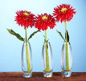 Beautiful red dahlias in vases on blue background — Stock Photo