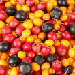 Autumn berries close-up - Stock Photo